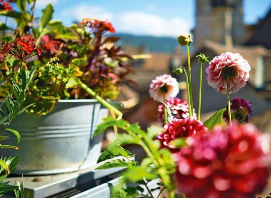 balkone bepflanzen super easy gartenzauber. Black Bedroom Furniture Sets. Home Design Ideas