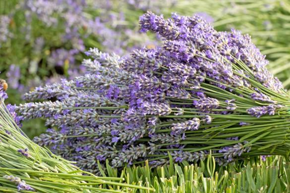Bouquet of Purple Lavender