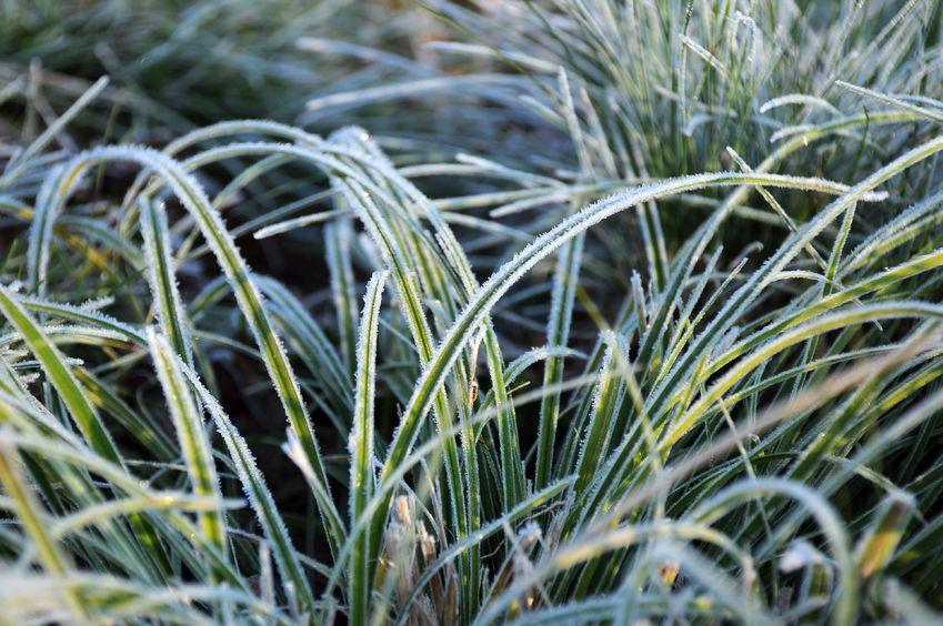 Rasen im Winter