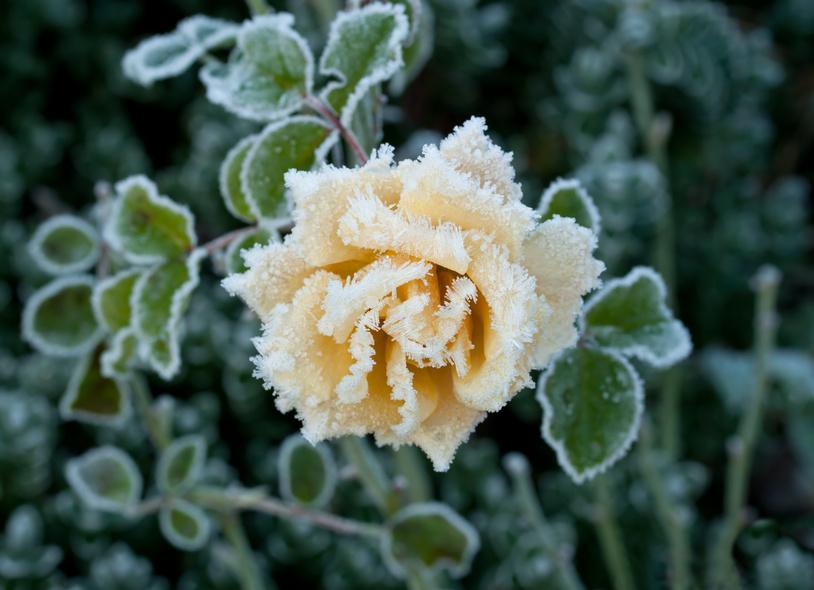 Gartentipps im November: Ziergarten - Gartenzauber