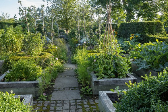 Wooden raised beds in kitchen garden, stone path, cosmos, bamboo cane wigwam