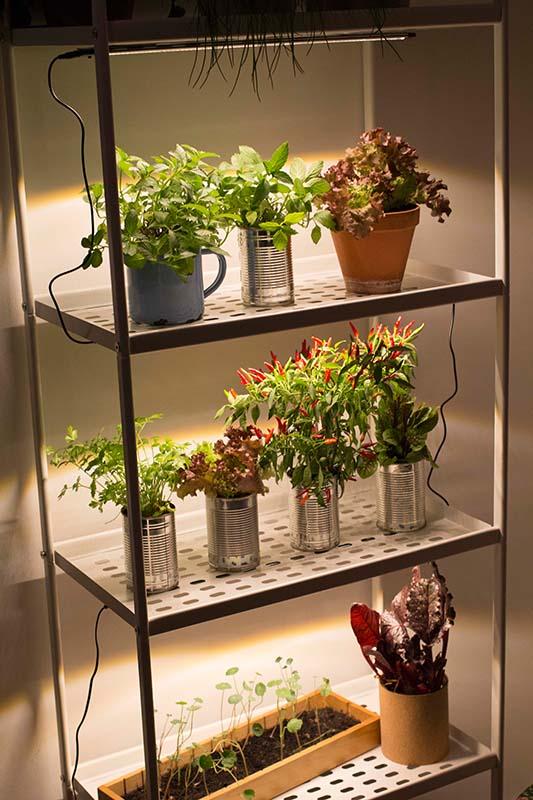 indoor gardening gartenzauber. Black Bedroom Furniture Sets. Home Design Ideas
