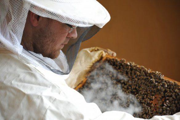 Besänftigender Rauch: Mithilfe einer Rauchkanne lenkt der Imker die Bienen von sich ab – schließlich ist es wichtiger, sich um einen potenziellen Brandherd im Stock zu kümmern, als sich um einen einzelnen Menschen zu scheren.