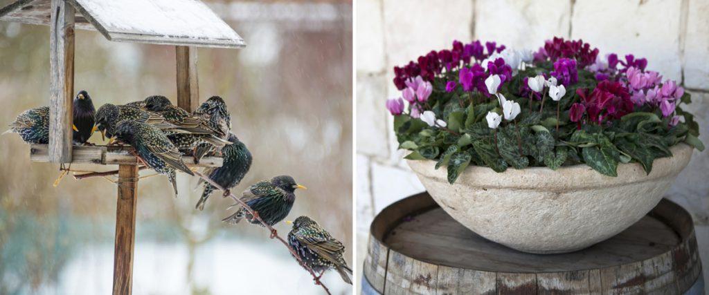 Gartentipps Im Januar: Ziergarten - Gartenzauber Garten Januar Was Ziergarten Tun