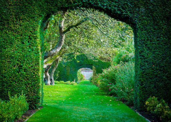 32753964 - green plant arches in english countryside garden
