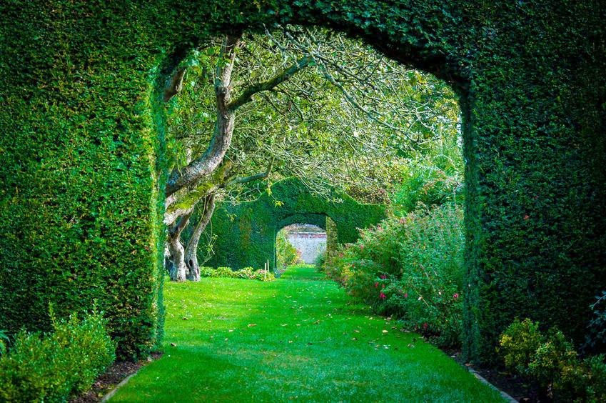 Zeit Für Den Heckenschnitt Gartenzauber