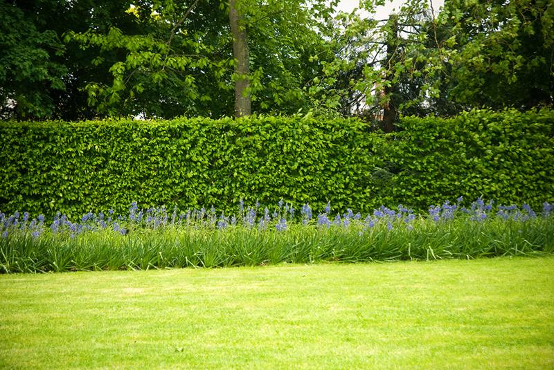 Gartengrenzen Hecke Mauer Oder Zaun Gartenzauber