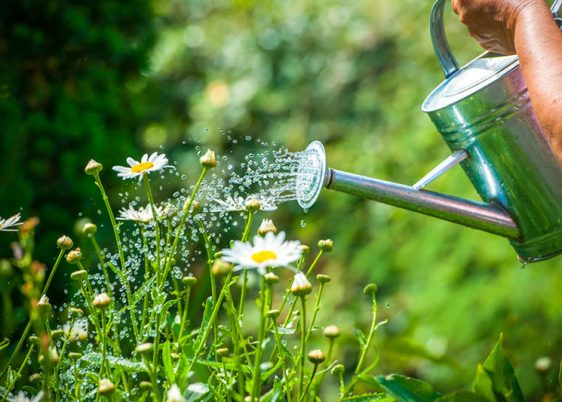 25257652 - watering flowers with a watering can