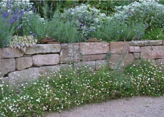 Blütendiadem: Lavendel, Perlkörbchen (Anaphalis triplinervis) und der extravagante Hopfen-Dost (Origanum rotundifolium) krönen die elegante Sandsteinmauer. Am Fuß schmückt sie eine Bordüre aus Spanischem Gänseblümchen (Erigeron karvinskianus).