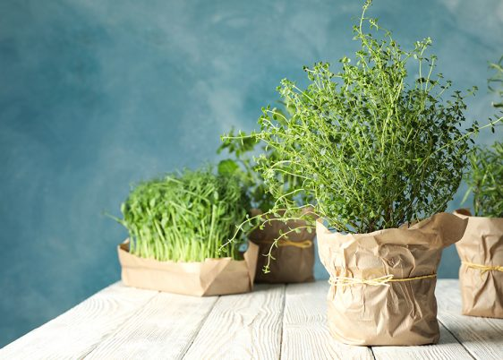 Different herbs on white wooden table against blue background