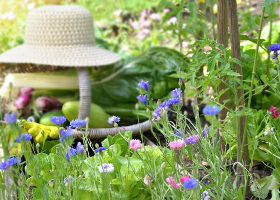 fresh vegetable in a wicker basket with hat placed in a flowered vegetable garden