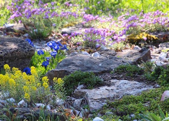 Pflanzen für die sonnig-schattige Trockenmauer