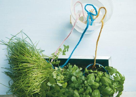 Pflanzen Bewaesserung